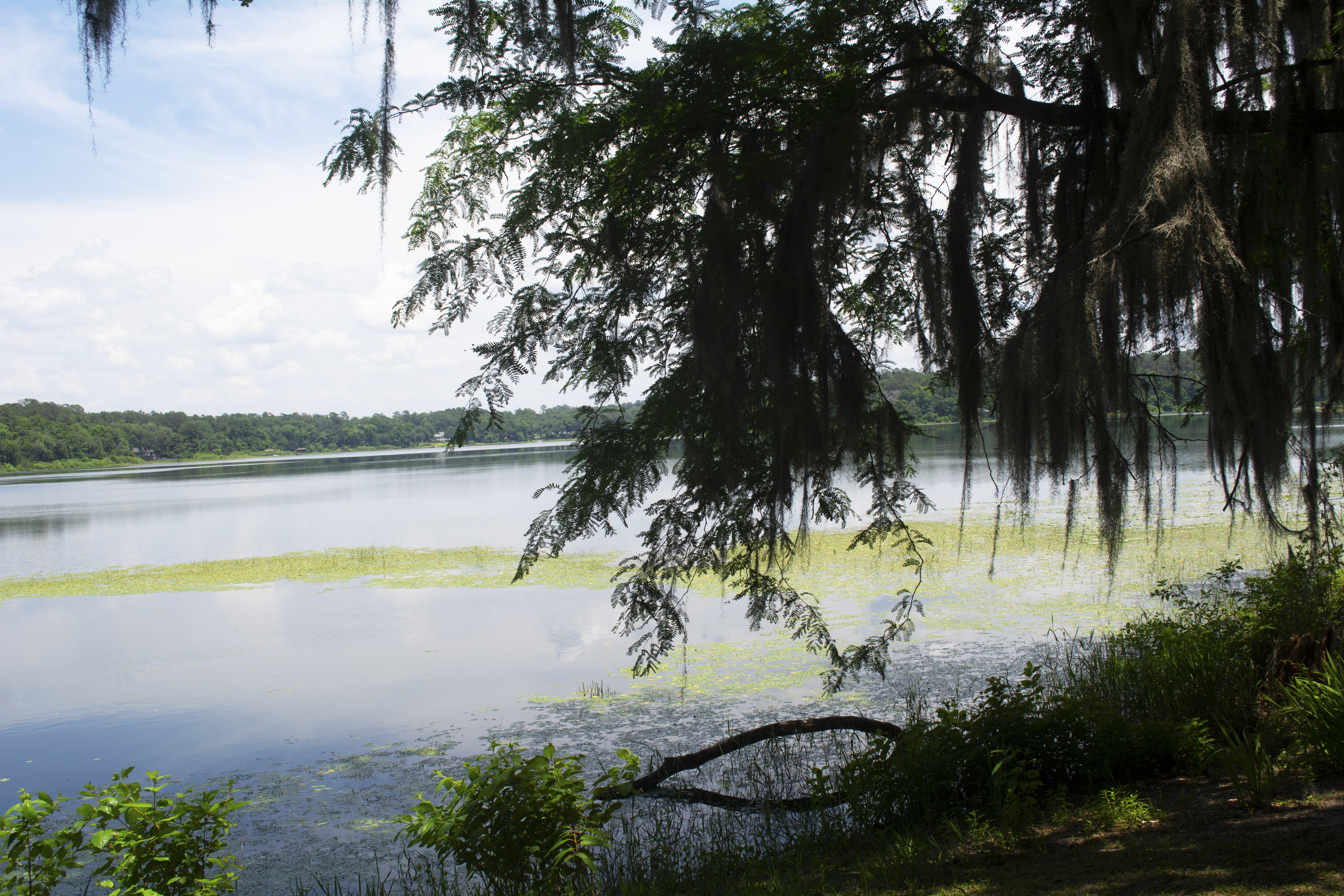 Tree branches hang with lake behind at Alfred B. McCabe Garden State Park in Tallahassee, FL