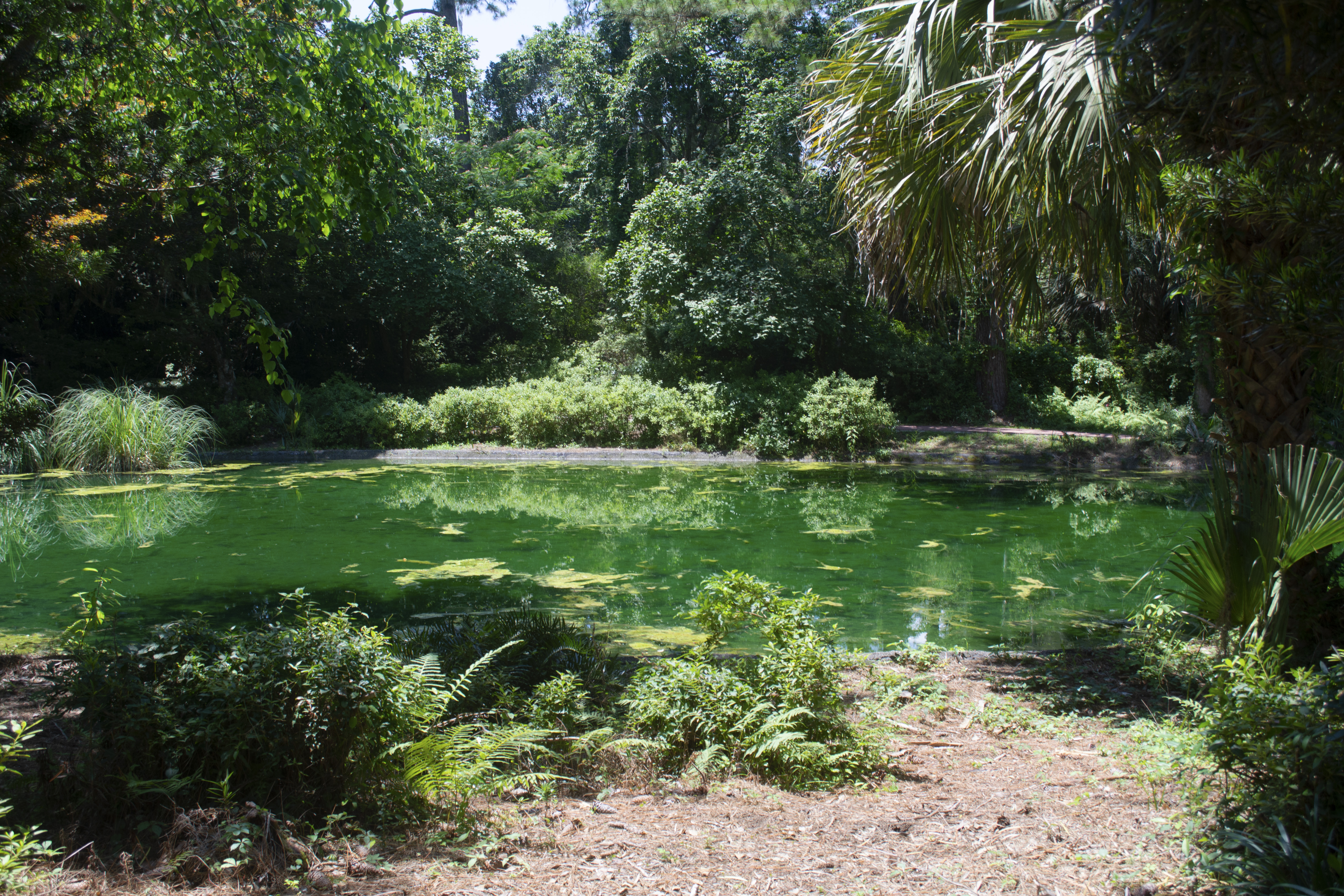 Pond at Alfred B. McCabe Garden State Park in Tallahassee, FL